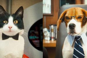 Кошки против собак: Месть Китти Галор 6094