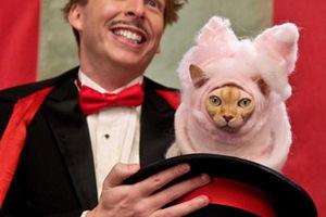 Кошки против собак: Месть Китти Галор 6093