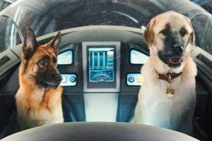 Кошки против собак: Месть Китти Галор 6088