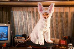 Кошки против собак: Месть Китти Галор 6090