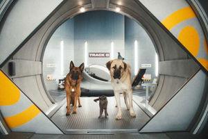 Кошки против собак: Месть Китти Галор 6096
