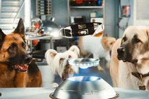 Кошки против собак: Месть Китти Галор 6089