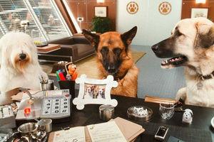 Кошки против собак: Месть Китти Галор 6091