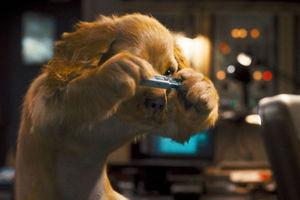 Кошки против собак: Месть Китти Галор 6095
