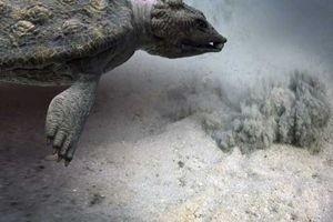 Морские динозавры 3D: Путешествие в доисторический мир 6768