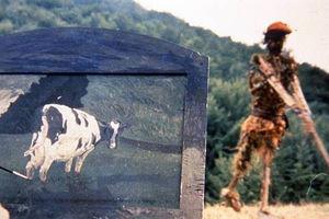 Коровы 8993