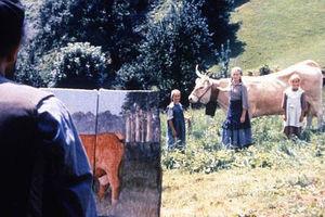 Коровы 8996