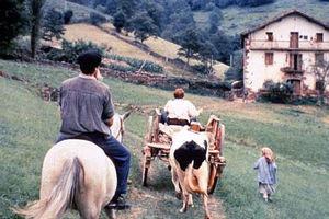 Коровы 8989