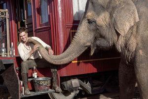 Воды слонам! 9070