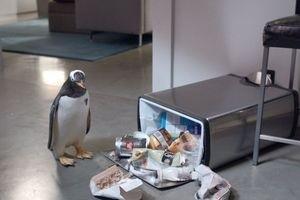 Пингвины мистера Поппера 9752