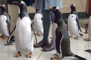 Пингвины мистера Поппера 9755