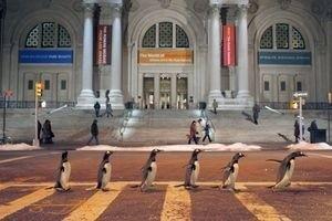 Пингвины мистера Поппера 9754