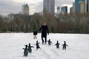 Пингвины мистера Поппера 9765