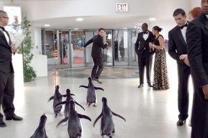 Пингвины мистера Поппера 9761