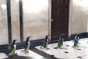 Пингвины мистера Поппера 9753