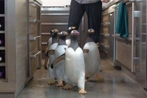 Пингвины мистера Поппера 9750