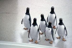 Пингвины мистера Поппера 9756