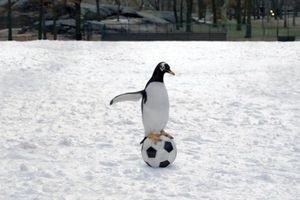 Пингвины мистера Поппера 9751