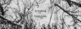 Northern Electronics: Acronym & Korridor live (se)
