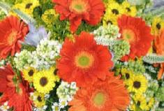 Всемирный день ботаников