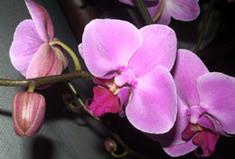 День распустившихся орхидей