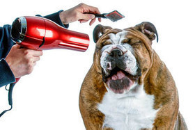 Подстригите свою собаку со скидкой 40-50%.