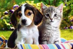 Распространенные заболевания домашних животных
