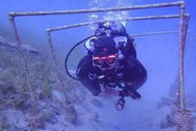 Начальный курс обучения дайвингу - OWD PADI (Open Water Diver)