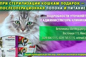 При стерилизации кошкам подарок - послеоперационная попона и питание!