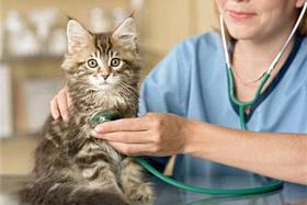 Как часто следует посещать ветеринарного врача