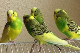 Новое поступление птиц.