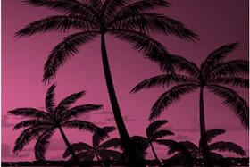 Ночь на «Карибах»