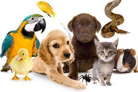 Новая услуга – гостиница для животных!