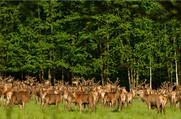 Припятский - Национальный парк