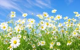 Обучение Скидка 10% для девушек до конца весны До 31 мая