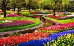 Туризм Акцыя «Берлін–парк кветак «Кейкенхоф»–Амстэрдам–Гамельн–Гослар» До 30 апреля