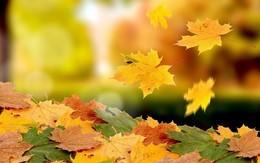 Акция «Осеннее предложение»