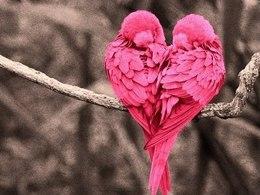 Акция «Скидки для влюблённых пар до 50%»