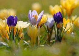 Красота и здоровье Акция «Скидки красивого месяца» До 30 апреля