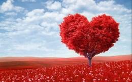 Акция «День Влюбленных»