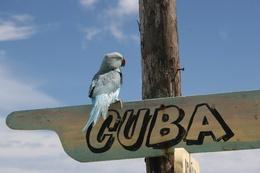Спецпредложение по Кубе