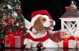 Новогодняя акция для собак