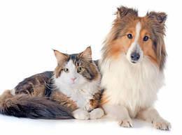 Скидка 20% на кастрацию/стерилизацию домашних животных