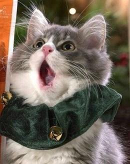 Акция «С котом в переноске - кофе в подарок»