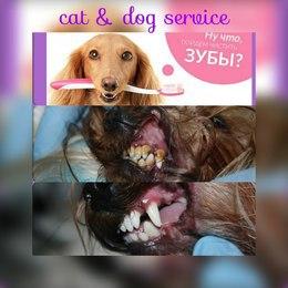 Скидка 50% на ультразвуковую чистку зубов