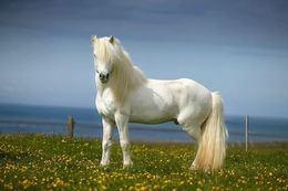 Акция «Белая лошадь»