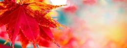 Красота и здоровье Акция «Бархатный сезон золотой осени» До 15 октября