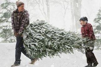 Где в Минске купить живую елку?