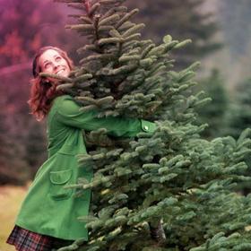 Искусственную или живую: какую елку выбрать на Новый год?