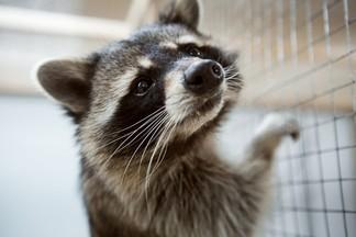 Фоторепортаж из самого большого контактного зоопарка Минска